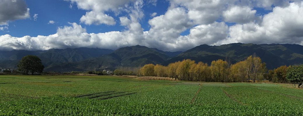 Garlic fields and mountain, Dali CN