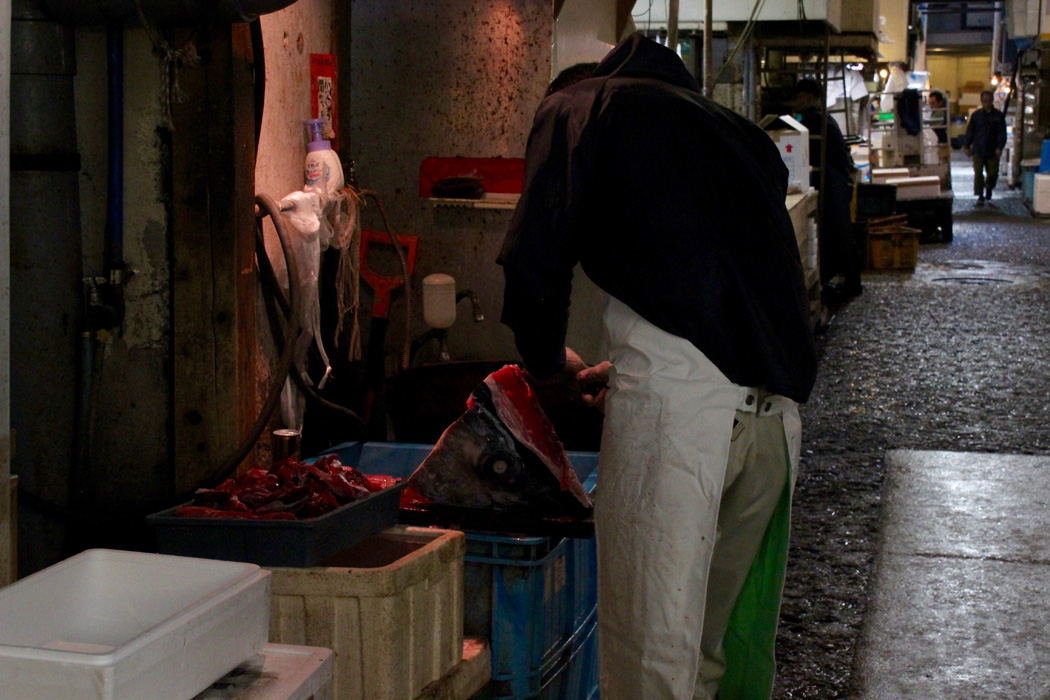 Tsukiji fish market adventure travels in asia for What does a tuna fish look like