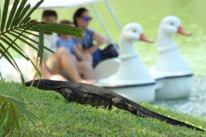 lizard at the lake